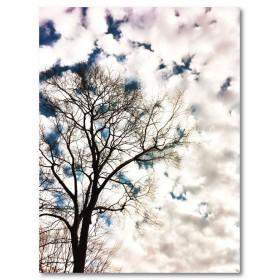 Αφίσα (γυμνός, χειμώνας, δέντρο, σύννεφα, μαύρο, λευκό, άσπρο)
